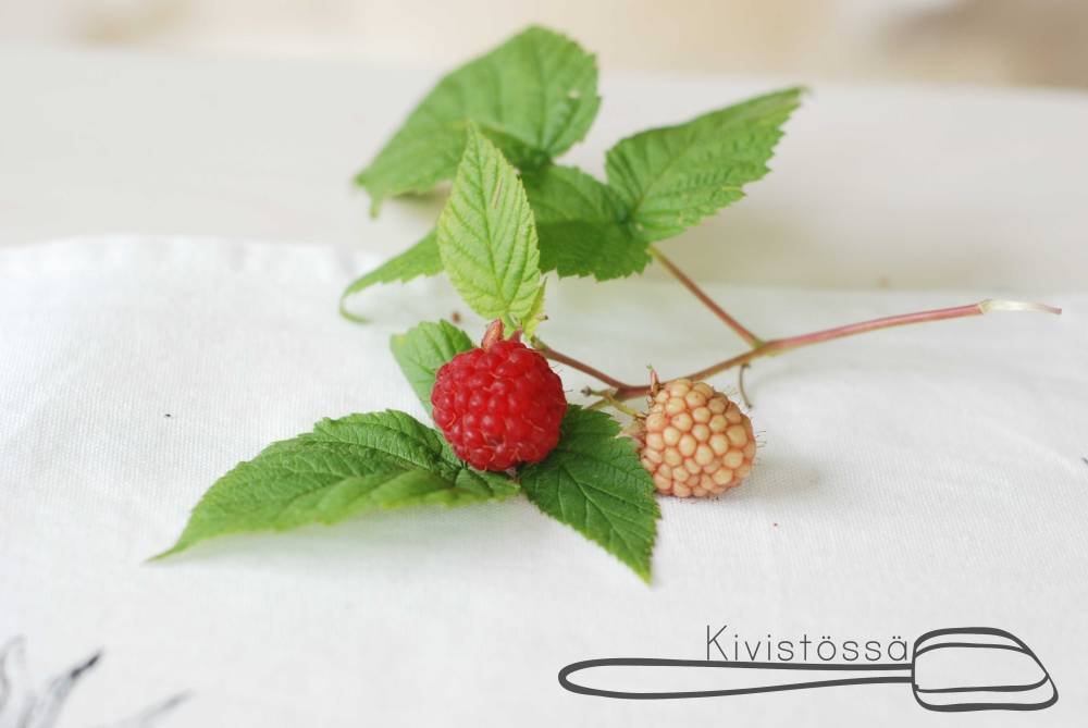 Perfect-Raspberry-Kivistössä-Blog
