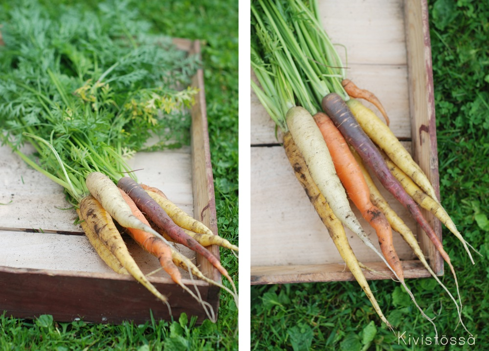 Uudet porkkanat