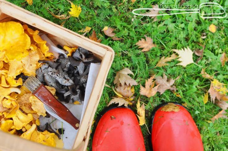 Sienimetsällä-Kivistössä-Blog