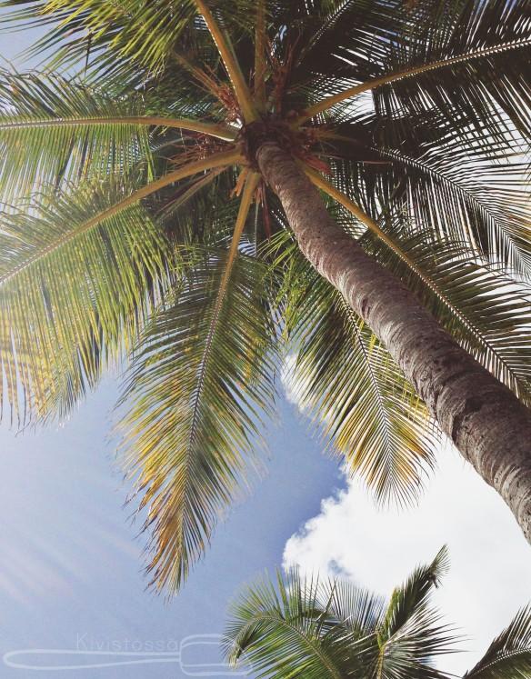 Palm tree, Guadeloupe - Kivistössä Foodblog www.kivistossa.fi